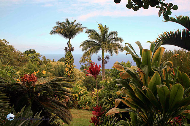 Garden of Eden Hawaii