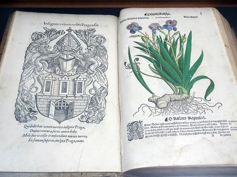 Zirci könyvtár - Virág