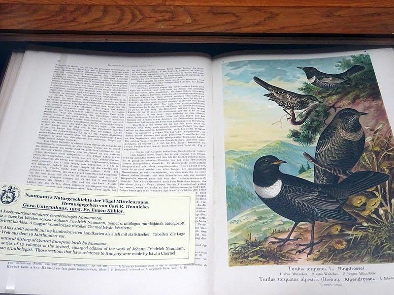 Zirci könyvtár - Nekem a legjobban a növény és állatábrázolások tetszettek