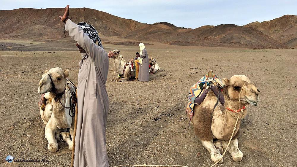 Egy beduin tevepásztor