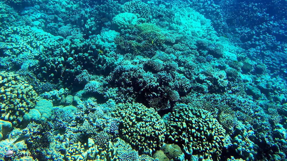 Az üveg aljú hajóval egészen közel ereszkedtünk a korallzátony fölé