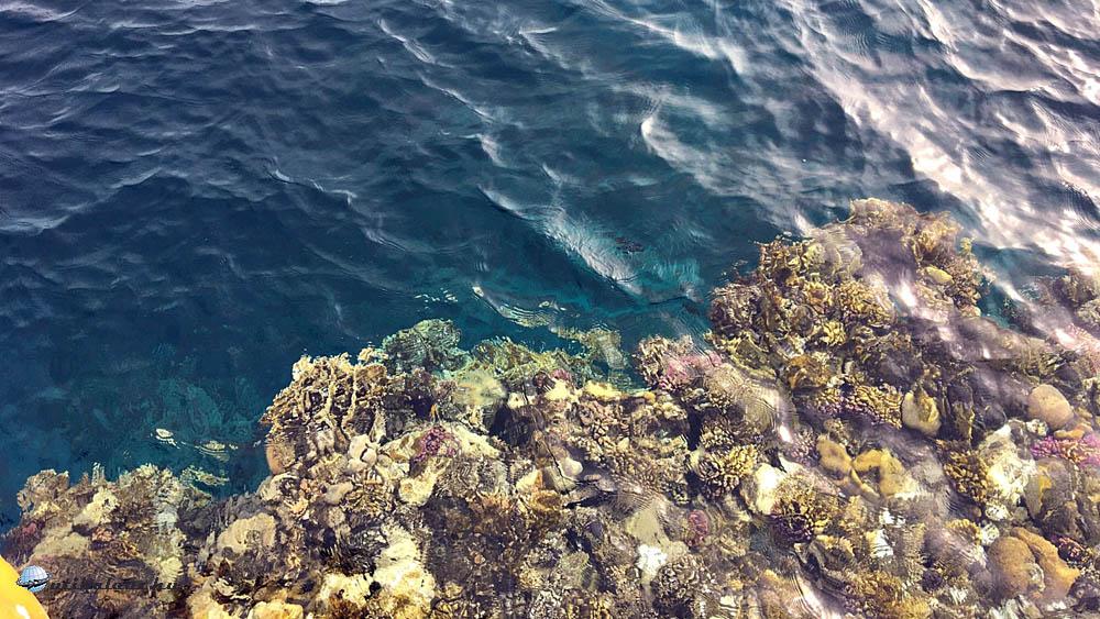 Korallok tömege nagyon közel a felszínhez