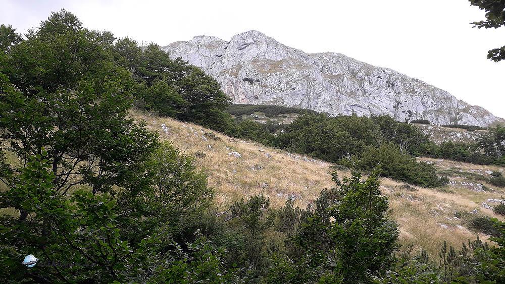 Az erdőhatár fölött kitárul a környező hegyek szépsége